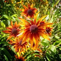 New Mexico Nature By Design Photo Gallery Image